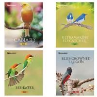 Тетрадь 48л. BRAUBERG ЭКО, клетка, обл. мел. карт., Красивые птицы, 402776